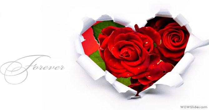 Send Flowers 24x7 Chicago Il Same Day Flower Delivery
